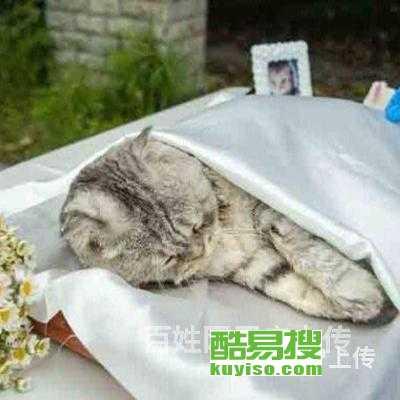 寵物殯葬圖